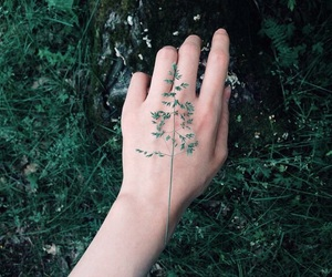 alternate, leaves, and nature image