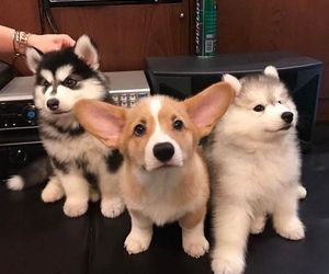 dog, animal, and puppy image