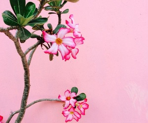 pink, flowers, and plants image