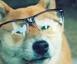 dog, glasses, and funny image