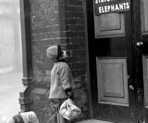 elephant, black and white, and child image