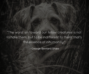 animal rights, animals, and quotes image