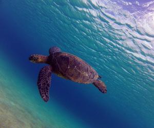 hawaii, ocean, and snorkling image