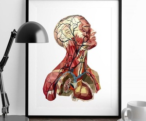 anatomia, medicina, and med student image