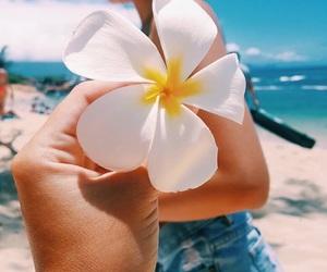 australia, beach, and bikini image