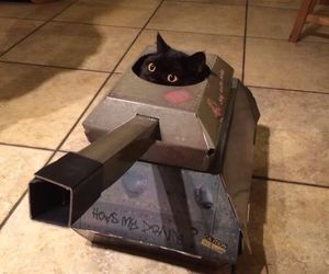 cat and tank image