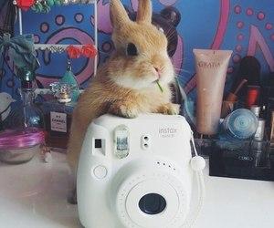 rabbit and animals image