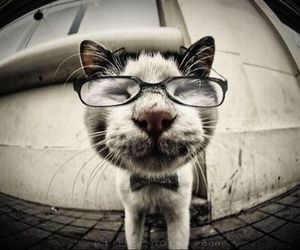 cat, cute, and glasses image