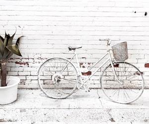 beautiful, bicycle, and bike image