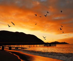 beautiful, beach, and photography image