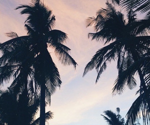 summer, travel, and tree image