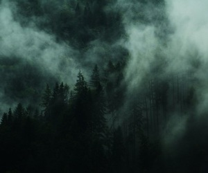 forest, fog, and mist image