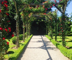 parc, rose, and rouge image