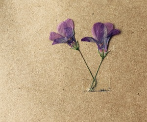 beautiful, dried, and dried flowers image