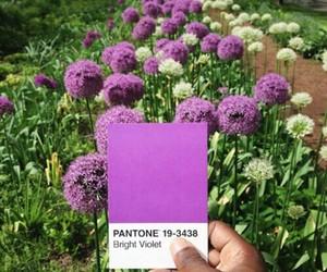 pantone, flowers, and purple image