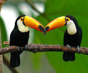 birds, colors, and jungle image