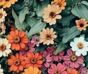 alternative, colour, and flowers image