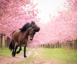 horse, equine, and pink image