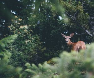 forest and deer image