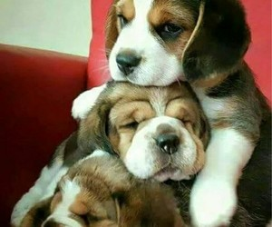 puppy, dogs, and animals image