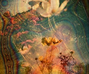 flowers, psychedelic, and trippy image