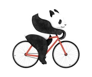 bears, illustration, and pandas image