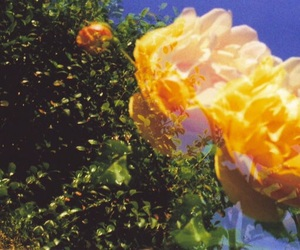 aesthetic, vintage, and flowers image