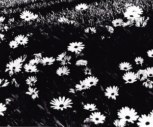 black and white, flores, and flowers image