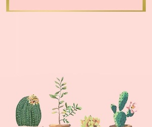 wallpaper, background, and cactus image
