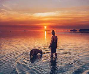 beach, ocean, and dog image