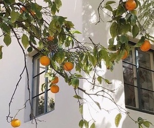 orange, white, and fruit image