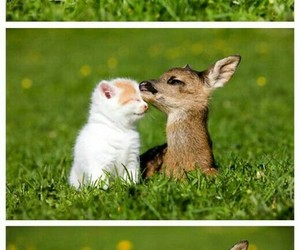 animals, friendship, and cat image