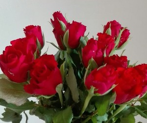 red, rose, and sweet image