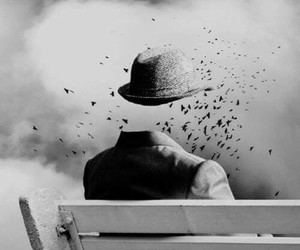bird, black and white, and hat image