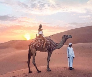 camel, travel, and desert image