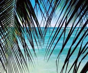 adventure, bahamas, and Island image