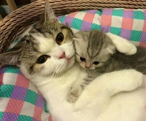 aww, kitten, and cat image