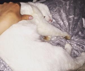 cat, hand, and nail image