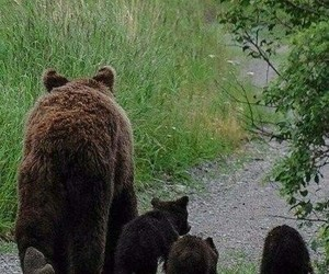 animals, bear, and family image