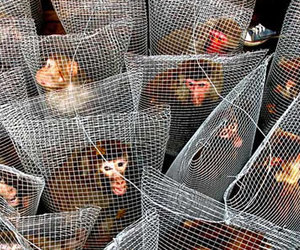 animal rights and caged animals image