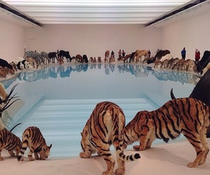 animal, pool, and tiger image