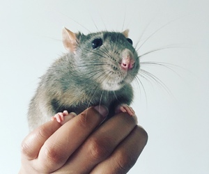 animal, cute, and lovely image