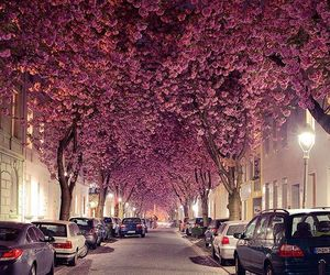 pink, street, and trees image