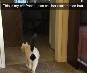 animal, cat, and exclamation image