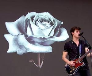 rose, illuminate, and shawnmendes image