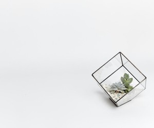 plants, minimal, and succulents image