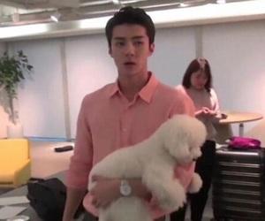 dog, exo, and kpop image