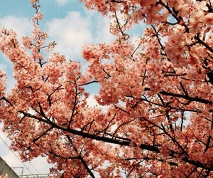 cherry blossom, spring, and flower image