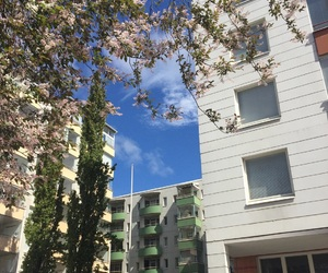aesthetic, blossom, and buildings image