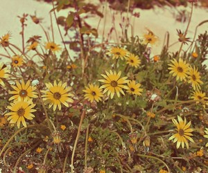 beauty, yellow, and flowers image